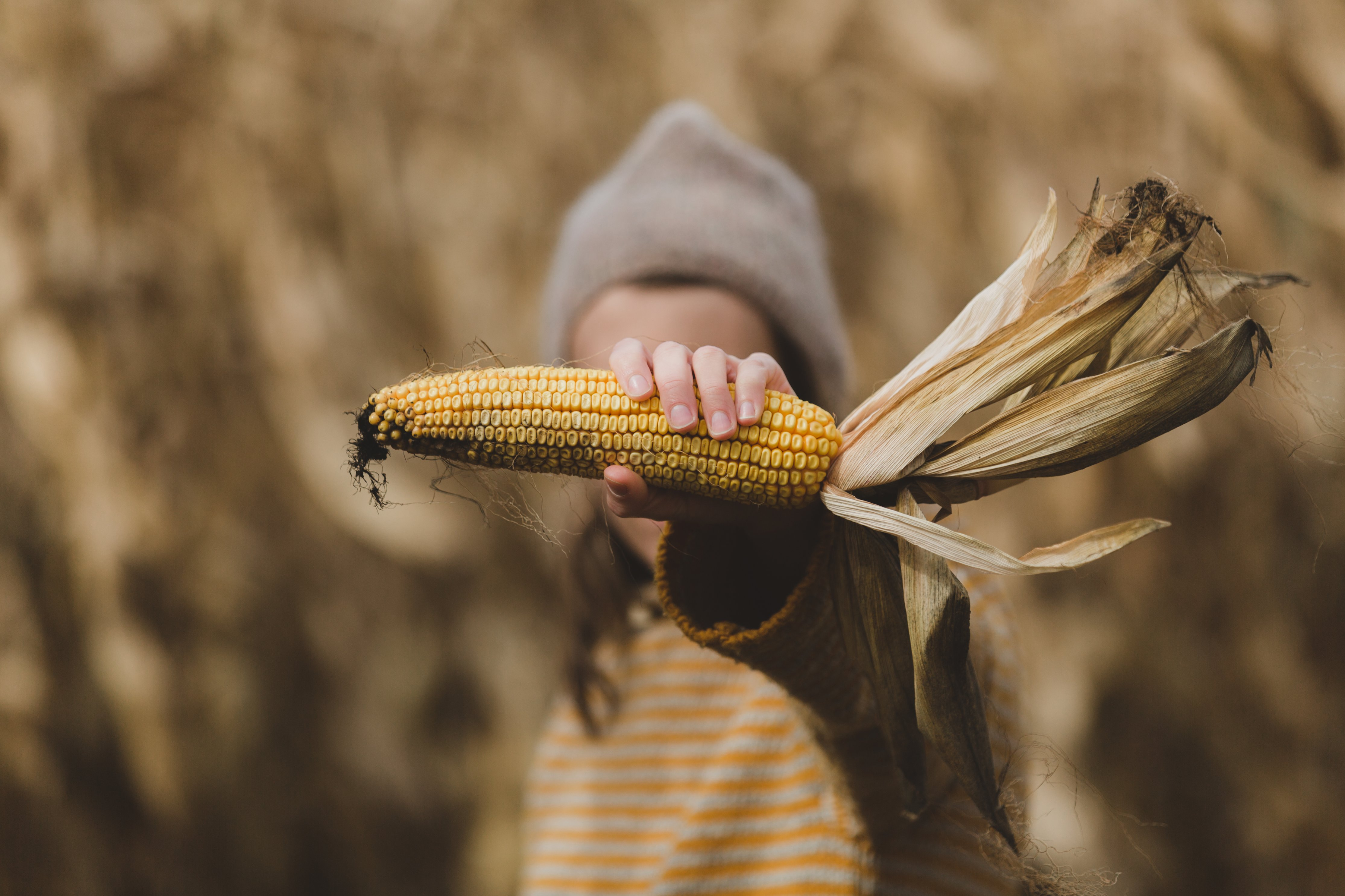 Family Fun Activities to Try this Fall's featured image