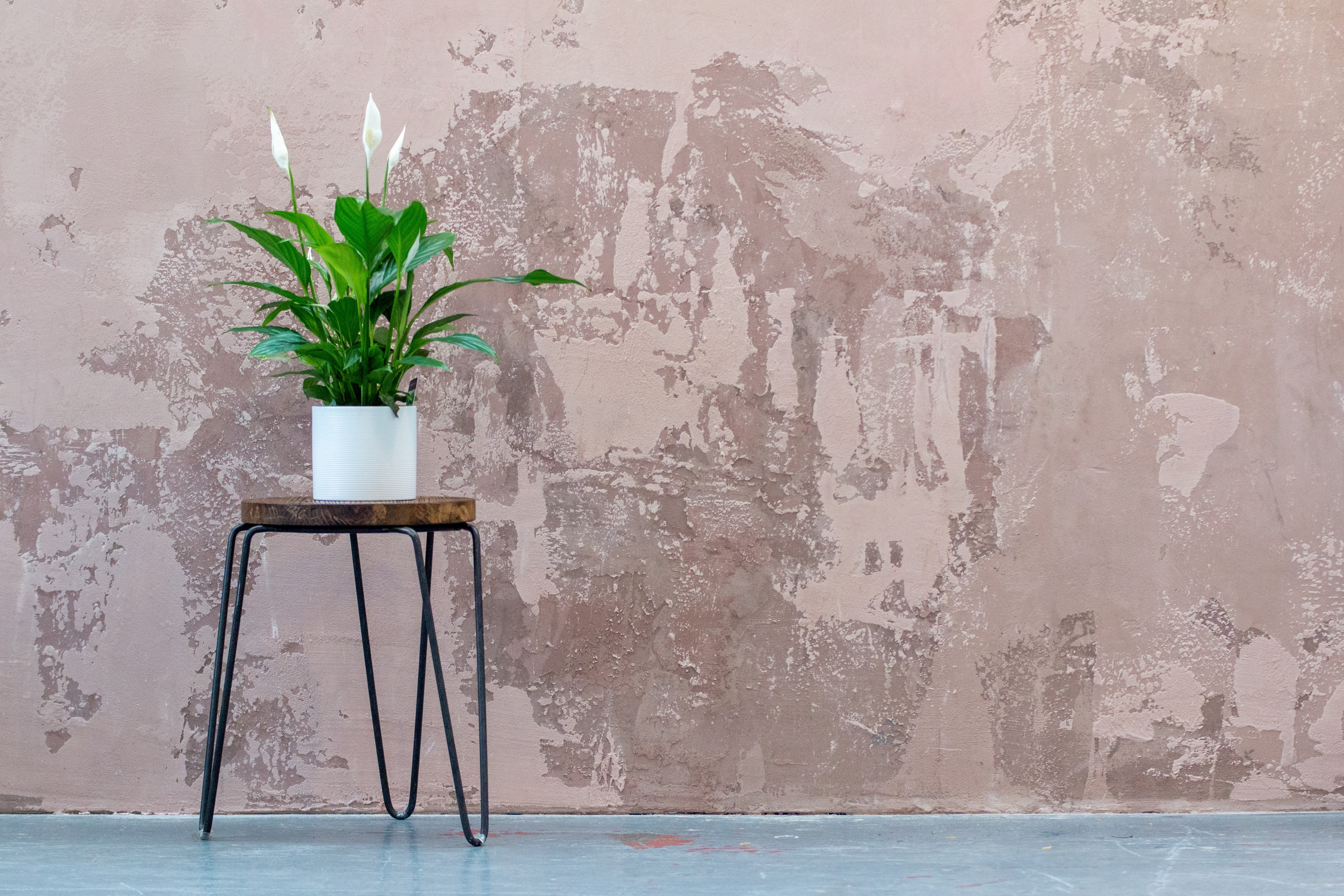 Indoor Plants to Fend off February Blues's featured image