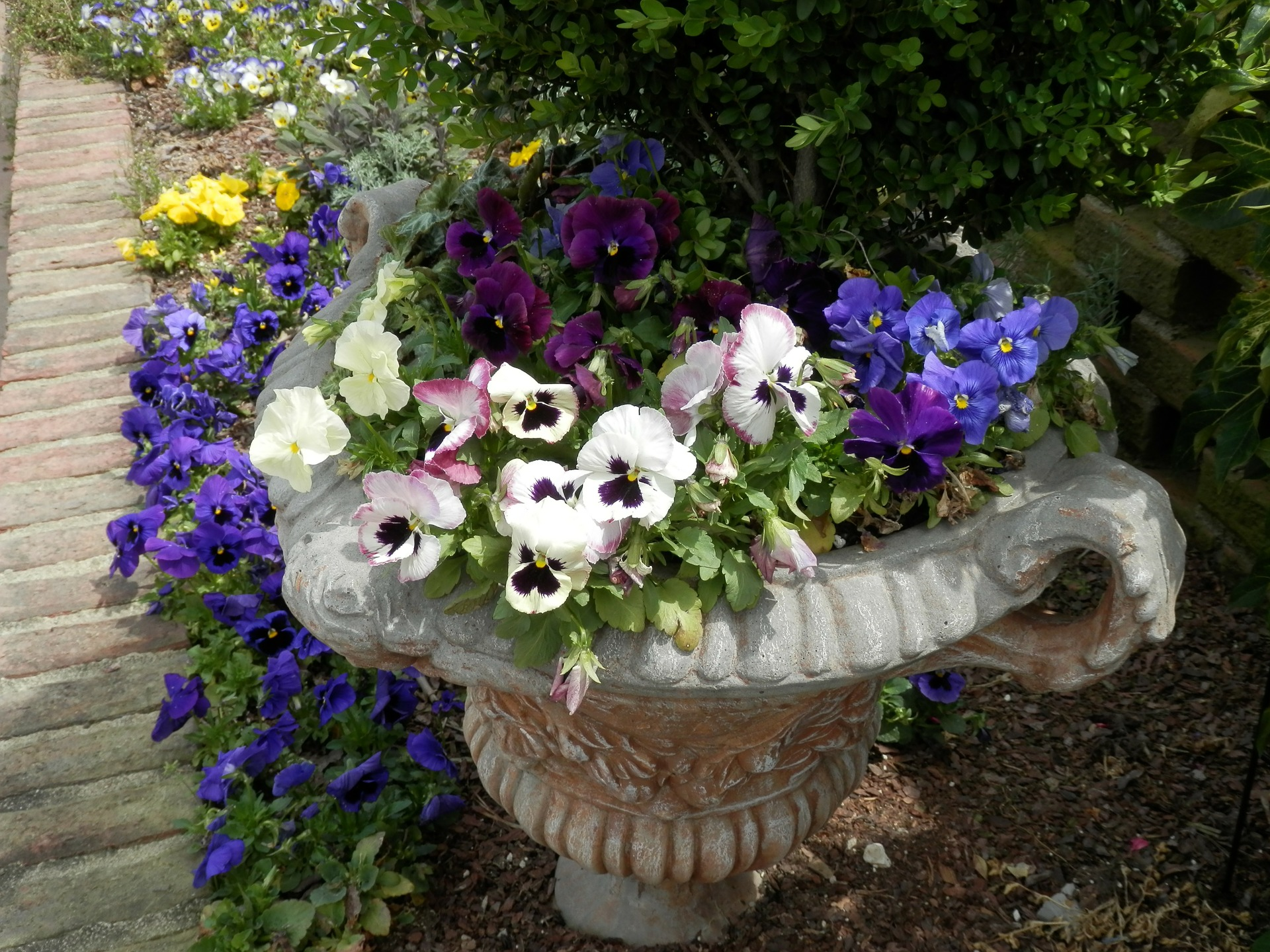 Prepping Outdoor Containers for Spring Flowers's featured image