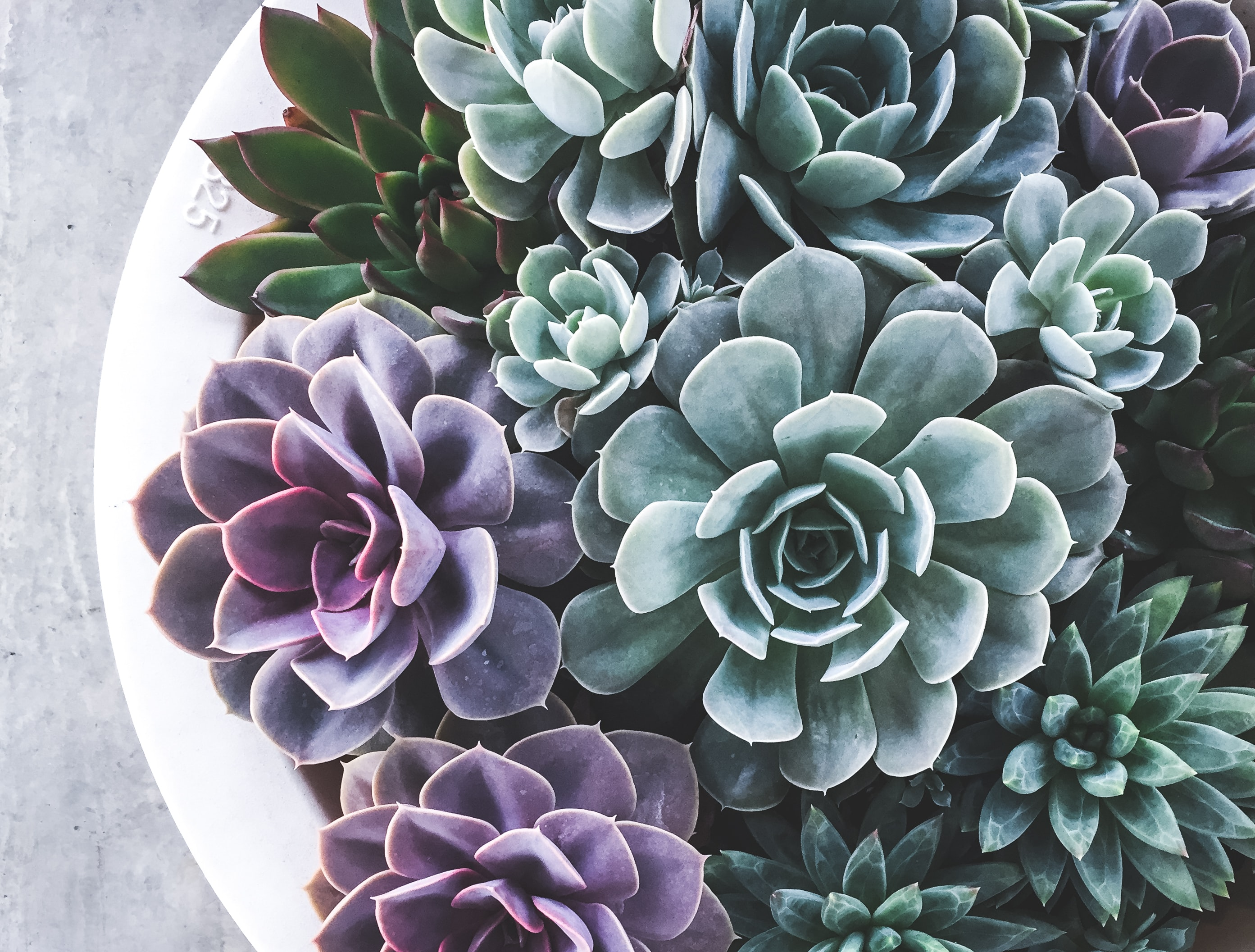 5 Houseplants You Can't Kill's featured image
