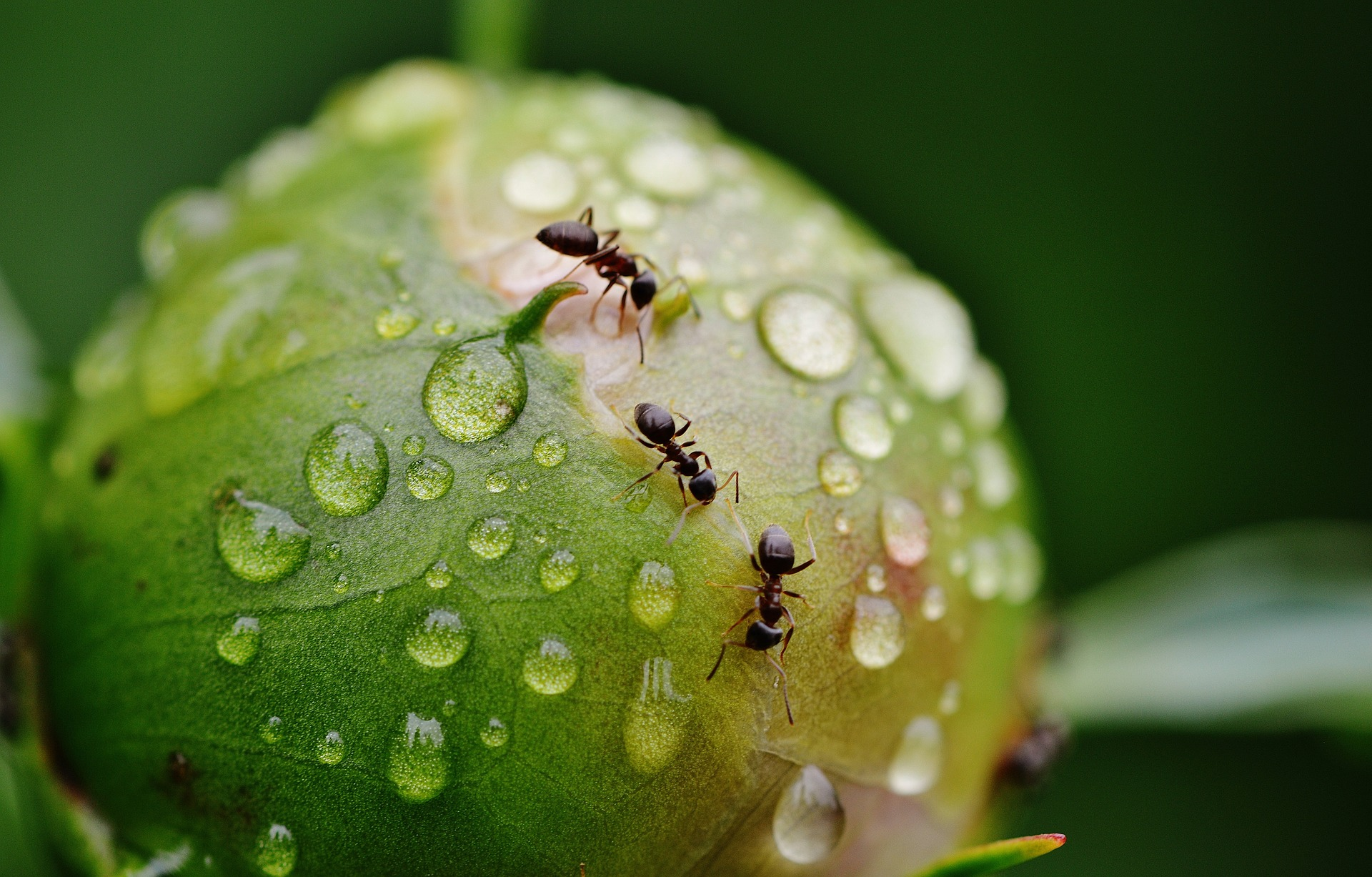5 Remedies to Get Rid of Ants's featured image